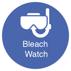 bleach_watch